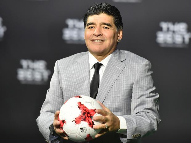 Sabung Ayam Online - Maradona